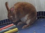 praying bunny