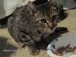 cat 1 (2)