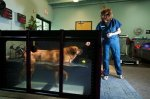 Hydrotherapy enrichment program at OHS improves dog health and adoption rate.
