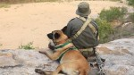 Anti-Rhino Poaching Dog from South Africa Honored as Hero
