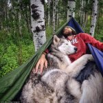Adorable Loki The Wolf Dog Travels Around The World With His Owner