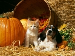 13 #BENEFITS OF #PUMPKIN FOR #PETS