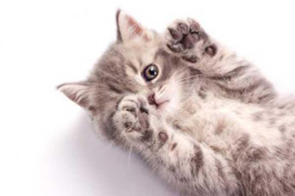 why do older cats yowl