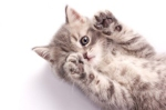 Why Do #Cats #Knead? 5 FunReasons
